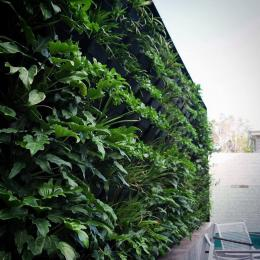 New Zealand Vertical Gardens Green Wall Living Wall Systems 6